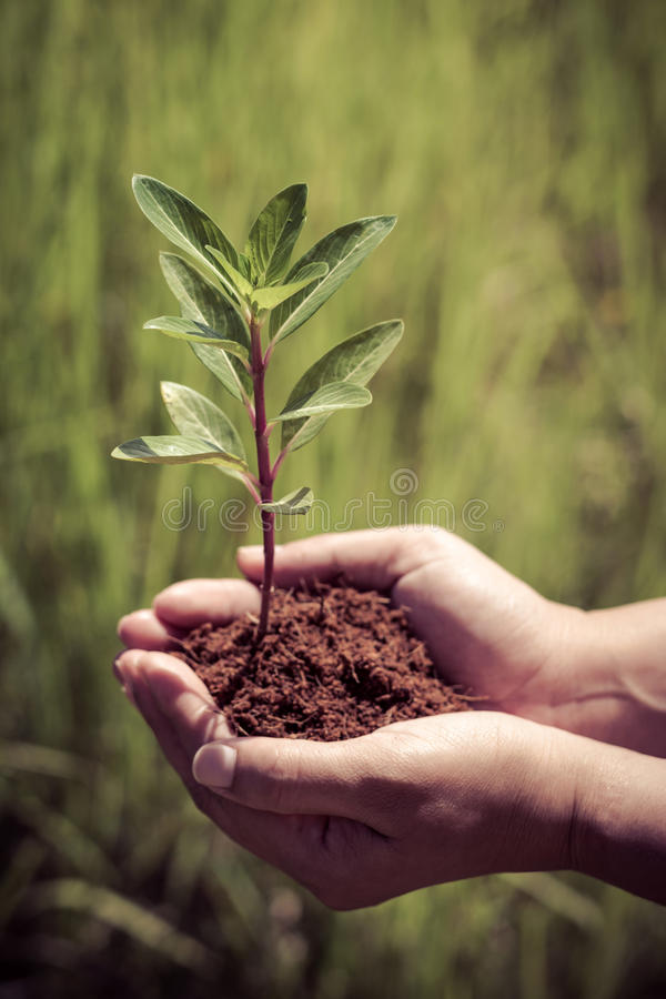 Hand holding and planting new tree royalty free stock photo