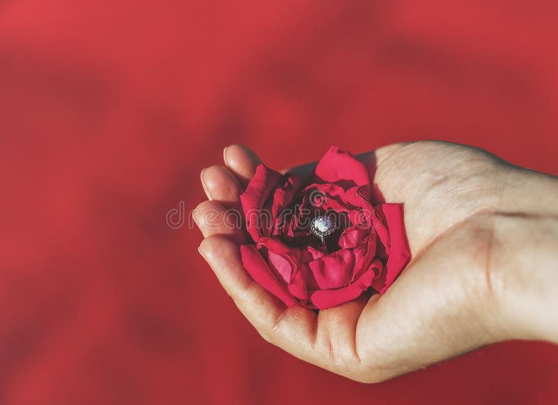 Hand holding red rose with diamond ring stock photos