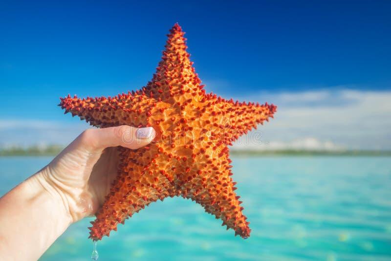 Hand holding a red starfish. Near Saona island in the Caribbean Sea, Dominican Republic stock photography
