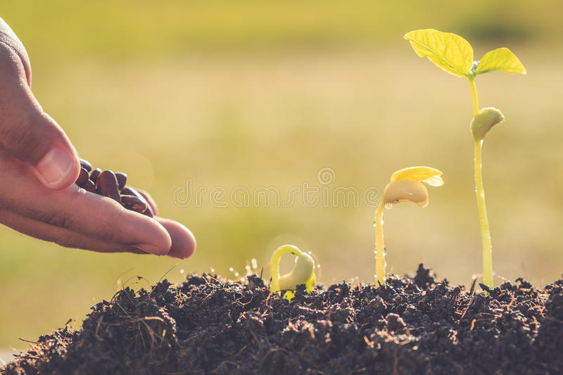 Hand holding seed and growth of young green plant royalty free stock image