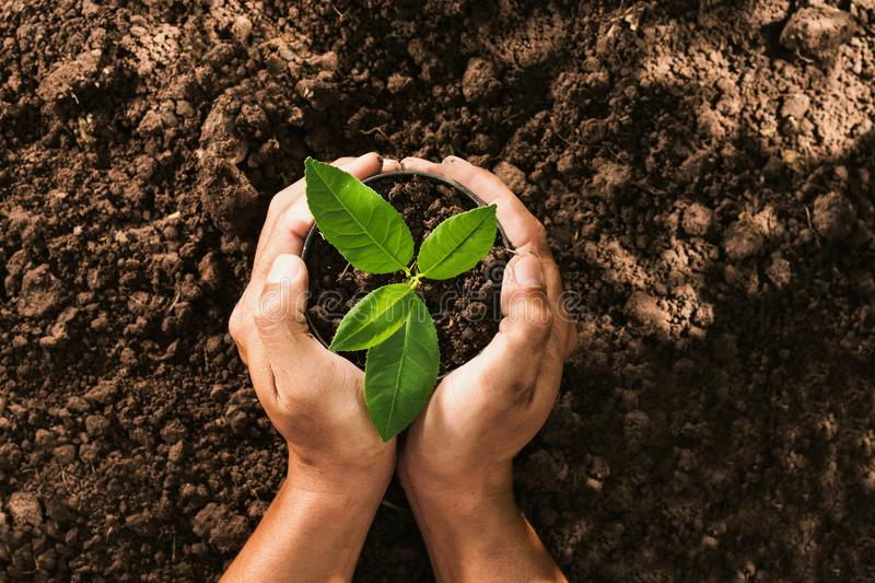 Hand holding seed tree in bag for planting. Into soil royalty free stock image