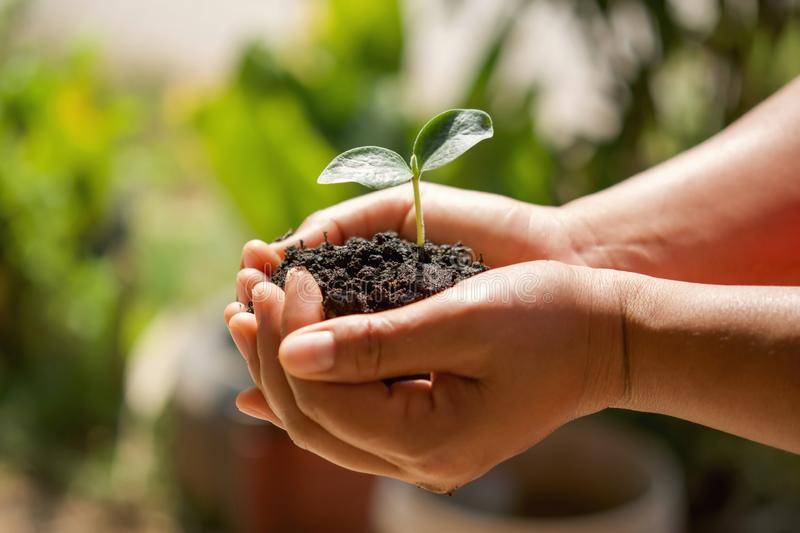 Hand holding small tree for planting in garden. eco. Concept royalty free stock photos