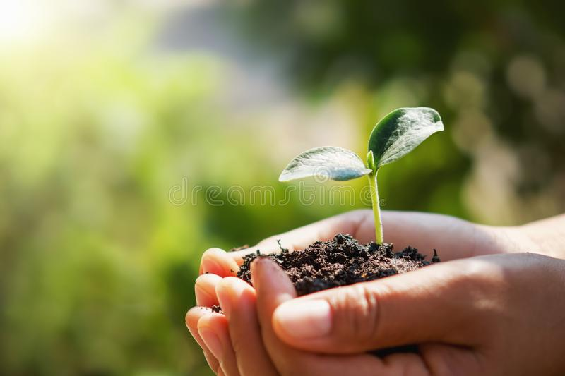 Hand holding small tree for planting in garden. eco. Concept royalty free stock image