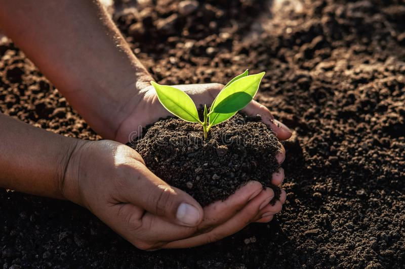Hand holding small tree for planting in morning light. concept green world earth day. Agriculture, background, bio, care, child, clean, conservation royalty free stock images