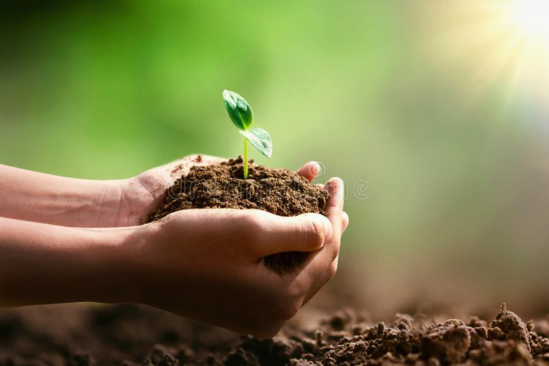 Hand holding small tree for planting and sunshine. Eco concept stock photos