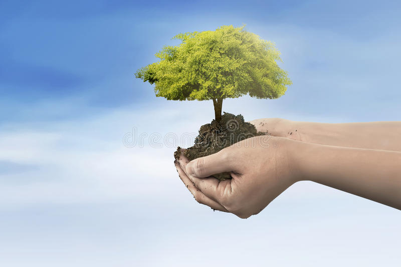 Hand holding tree plant on soil stock images