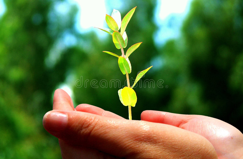 Download Hand holding tree seedling stock photo. Image of plant - 3760986
