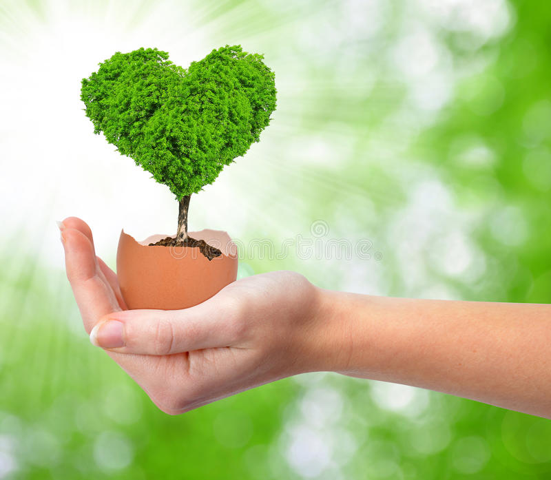 Hand holding tree in the shape of heart royalty free stock photography