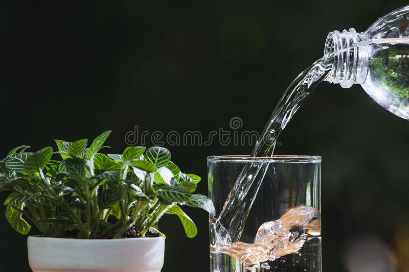 Hand holding water glass and bottle in nature background.  stock photo