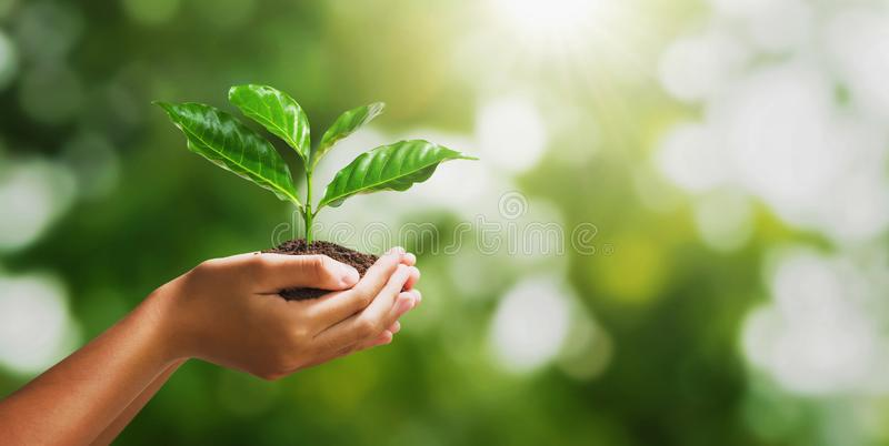 Hand holding young plant on blur green nature background and sunslight. concept eco earth day royalty free stock photos