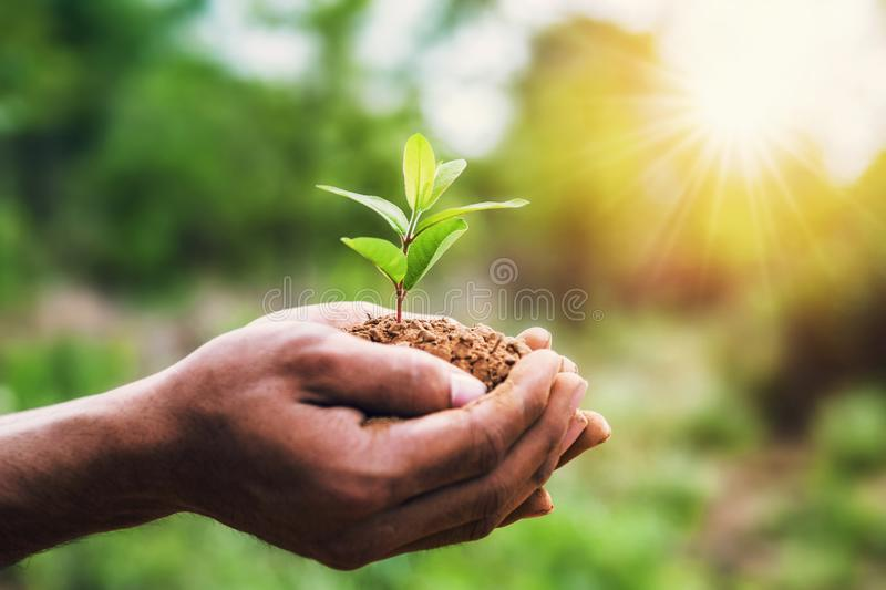 Hand holding young plant and green background with sunshine. eco concept earth day. Agriculture bio care child clean conservation development ecological ecology stock photo