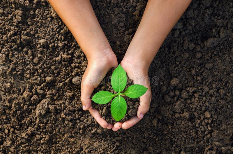 hand holding young plant for planting in soil concept green world royalty free stock photos