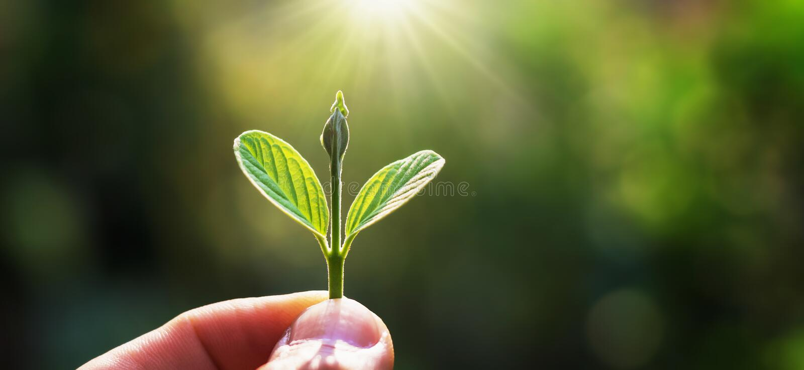 Hand holding young tree for planting with sunrise. concept save earth. Environment, background, day, environmental, new, nature, green, ecology, grow, world stock images