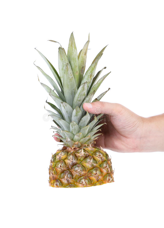 Download Hand Holds Top Of The Pineapple Stock Image - Image: 32715627