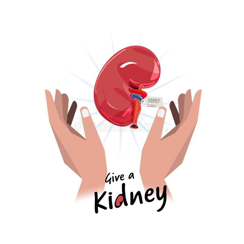 Hand with kidney. hope for organ donation concept - vector stock illustration