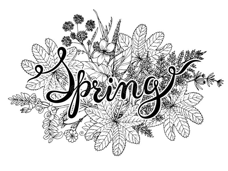 Hand lettering word Spring with hand drawn herbs and flowers. royalty free illustration