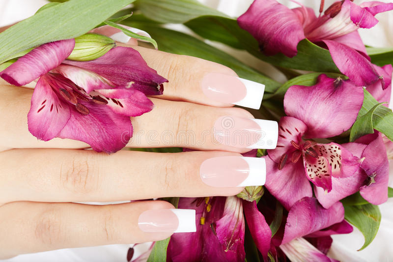 Hand with long artificial french manicured nails and lily flowers. Hand with long artificial french manicured nails on Alstroemeria lily flower background royalty free stock images