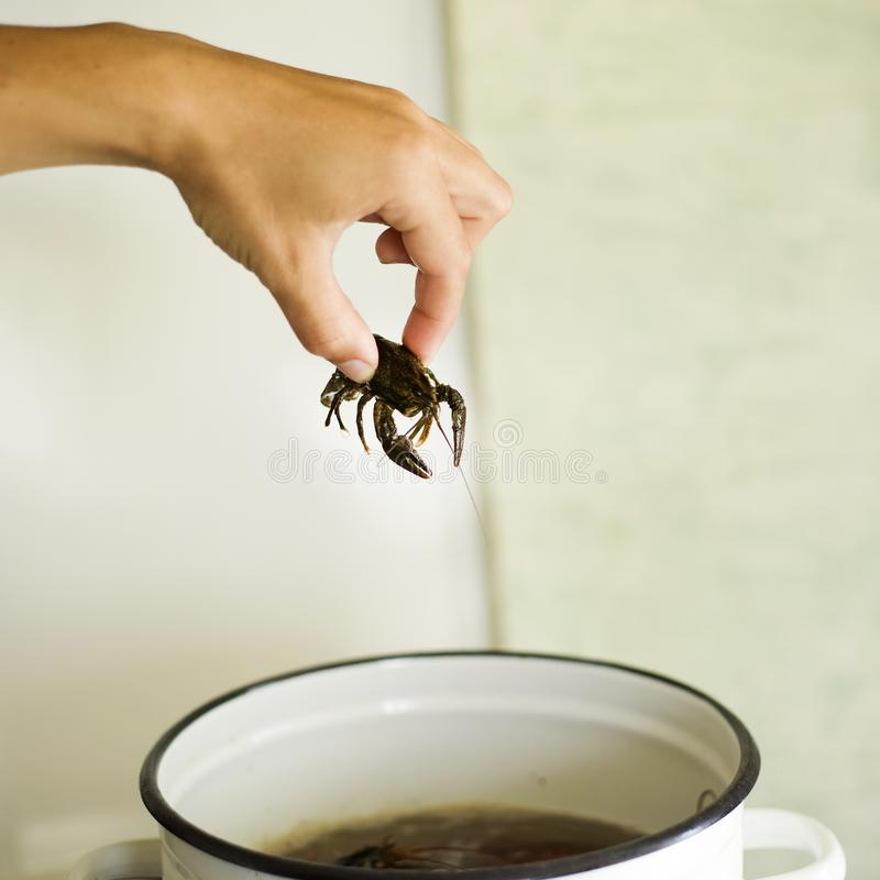 Hand lowers live crayfishin boiled water with dill and spices, homemade crayfish to beer stock photos