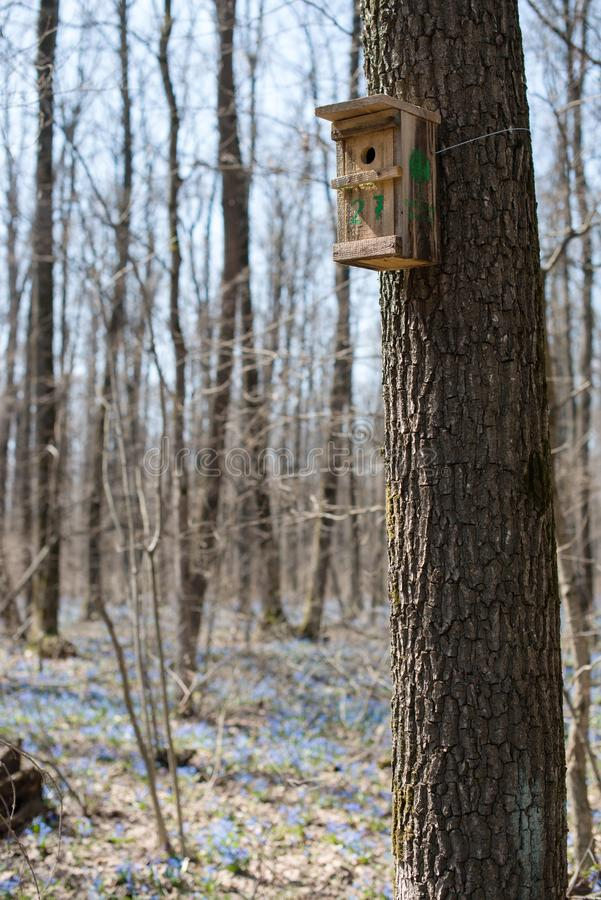 Hand made wooden birdhouse on tree in the forest stock photography