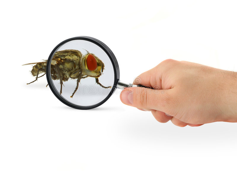 Download Hand magnifying fly stock image. Image of handle, closeup - 2239833