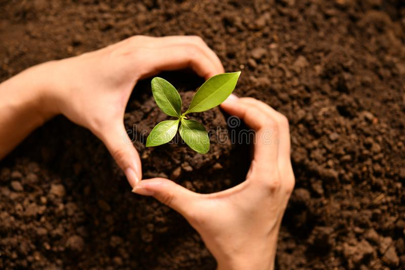 Hand making a heart shape around young plant royalty free stock image