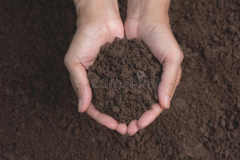 Hand of male holding soil in the hands for planting stock images