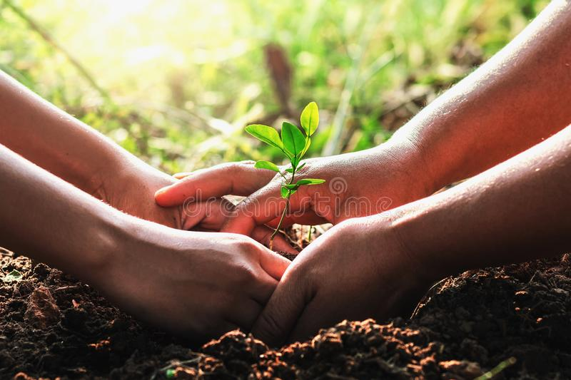 Hand mater and child helping planting small tree in garden. concept ecology royalty free stock image