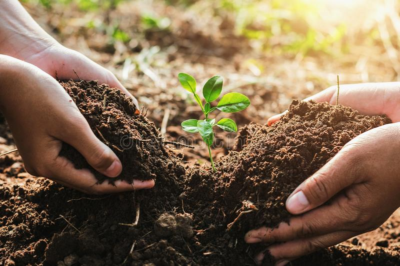 hand mater and child helping planting small tree in garden. concept ecology royalty free stock photo