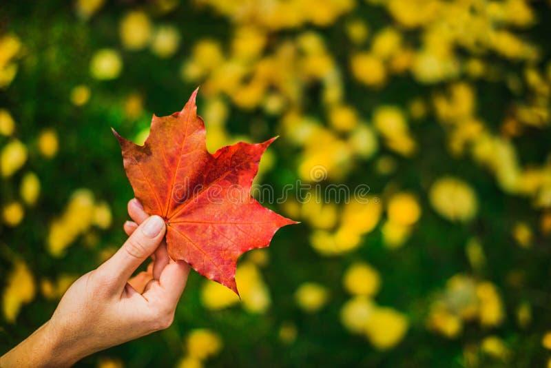 Hand med det röda bladet royaltyfri fotografi