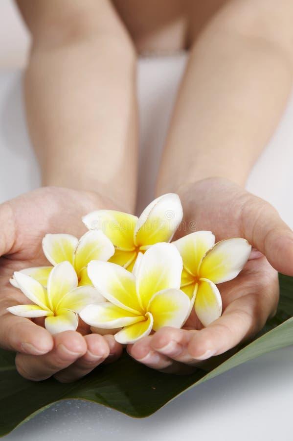 Hand met bloem stock afbeeldingen