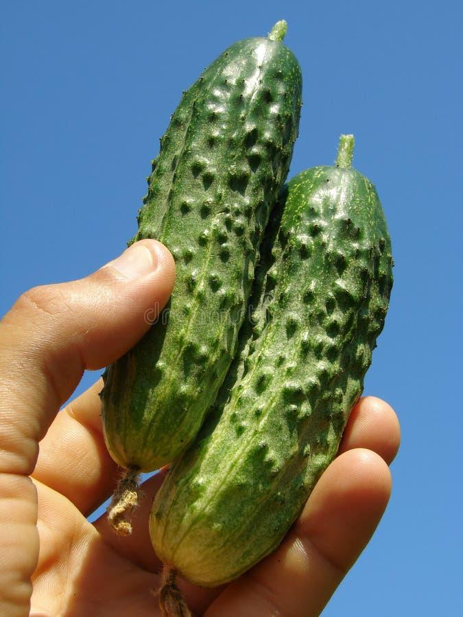Hand met komkommers royalty-vrije stock foto