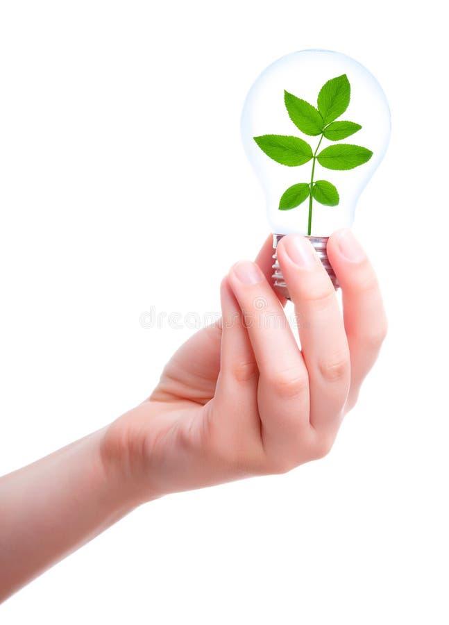 Hand met lamp en installatie stock foto