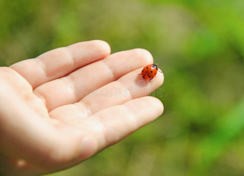 Hand met Lieveheersbeestje stock foto