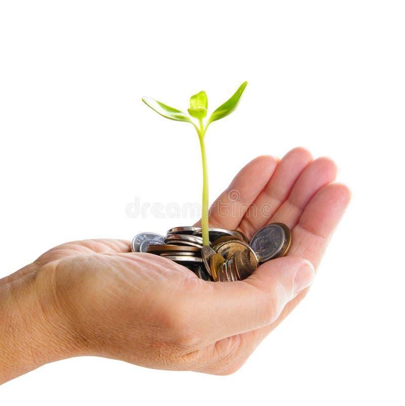 Hand mit dem Baum, der vom Stapel der Münzen wächst lizenzfreie stockbilder