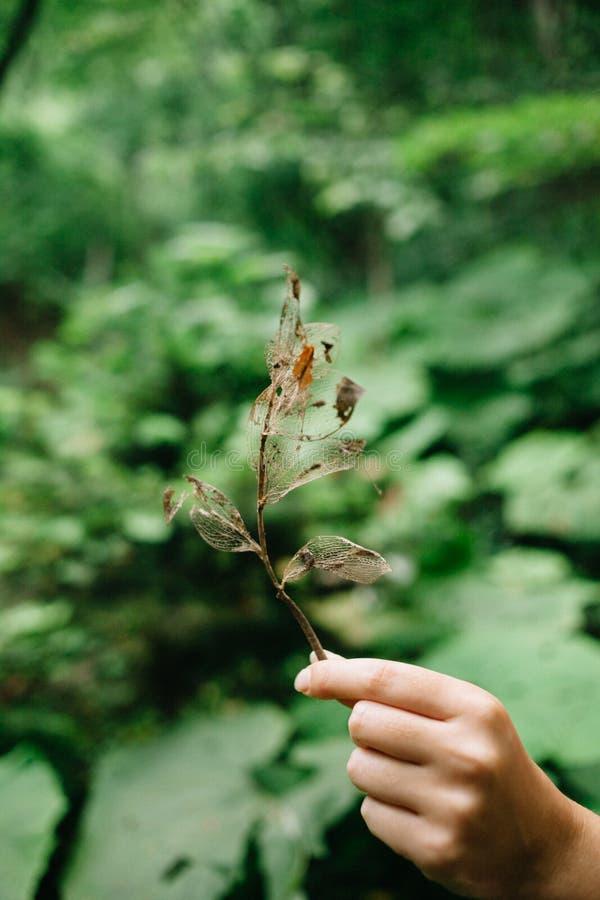 Hand mit einem Blatt des Skeletts auf dem Hintergrund des Sommerlaubs im Wald lizenzfreie stockbilder
