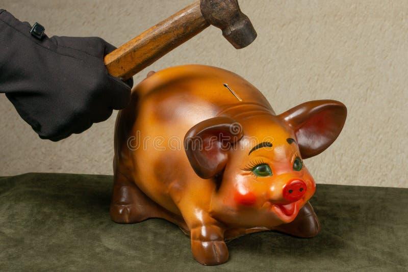 Hand mit einem Hammerbruchsparschwein stockfotografie