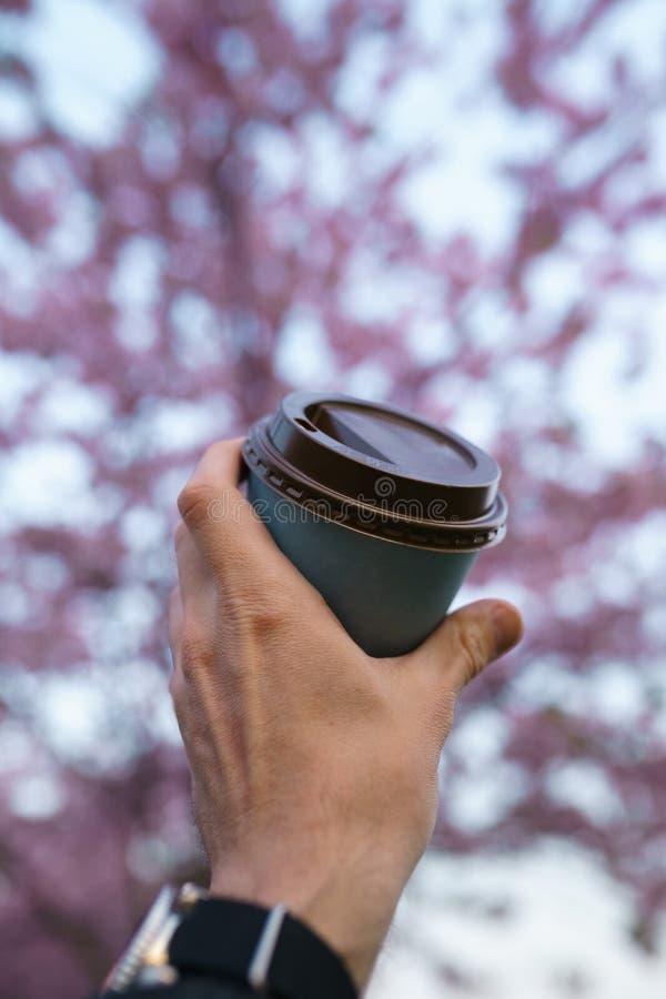 Hand mit Papiertasse kaffee - bunte Kirschbl?te-Kirschbl?te in einem Park in Riga, Ost - europ?ische Hauptstadt von lizenzfreies stockfoto