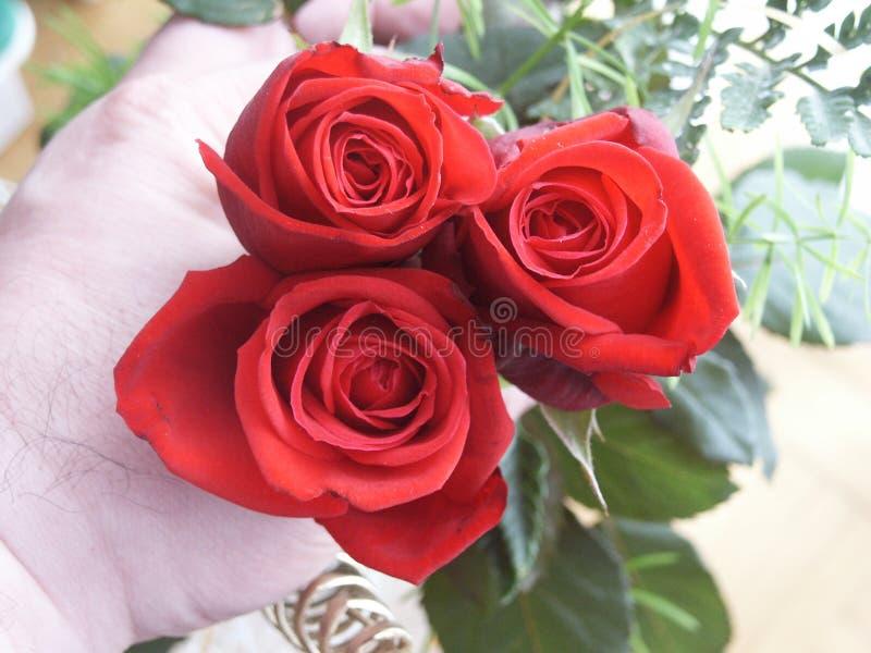 Hand mit Rosen stockbilder