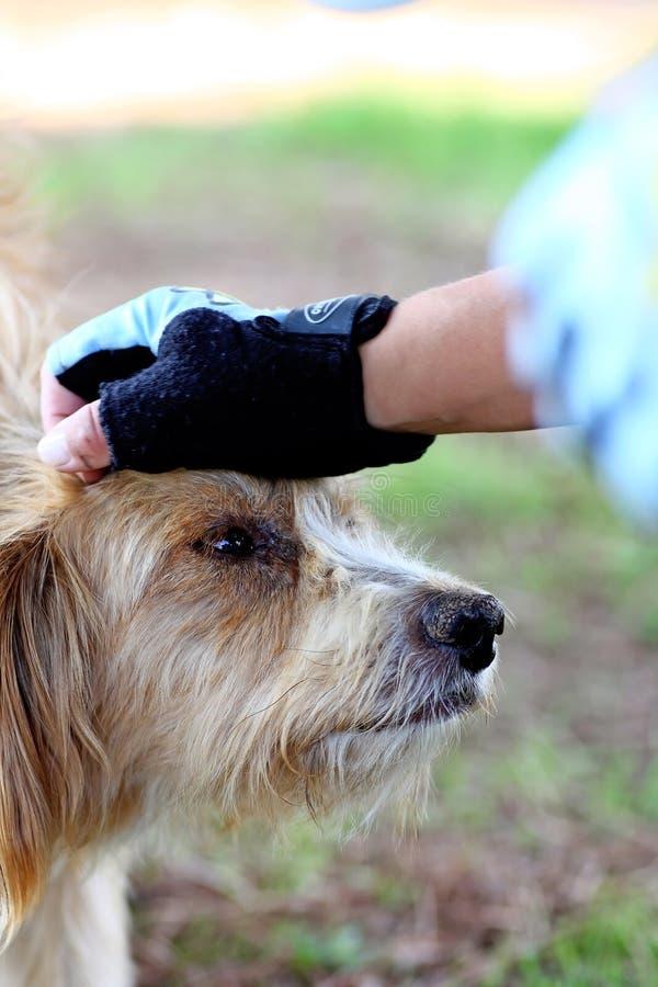 Hand oben auf Kopf des Hundes lizenzfreies stockfoto