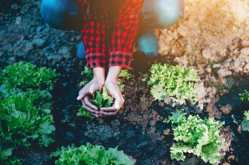 Hand och grönsaksallad och jordbruksprodukter som göras från lantbruket som bor a royaltyfria foton