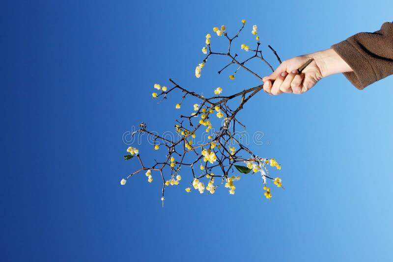 Hand Offering Mistletoe Stock Photos
