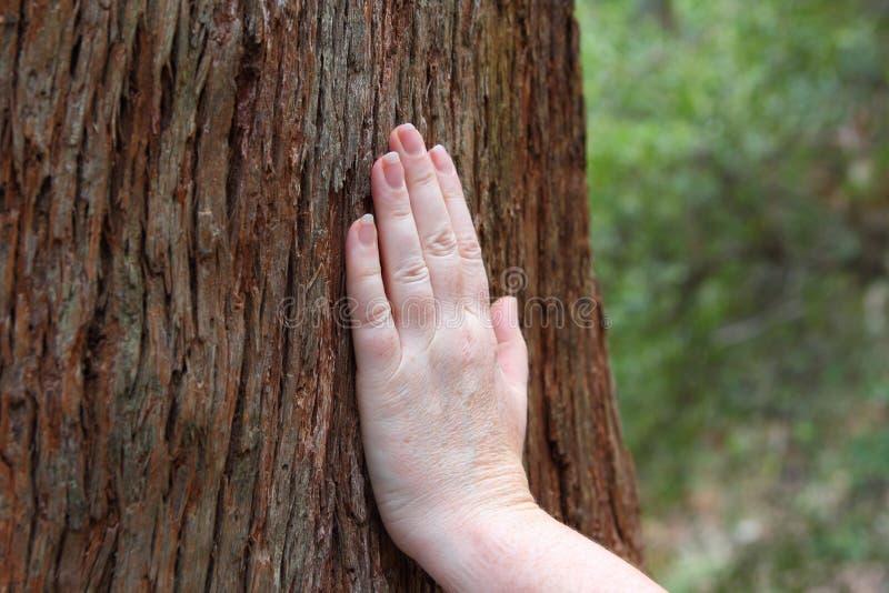 Hand op boomboomstam royalty-vrije stock afbeelding