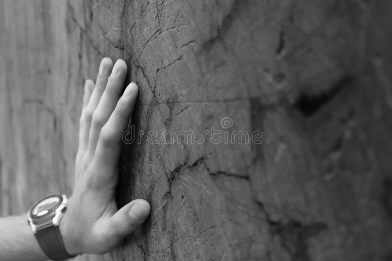 Hand op de Boomstam van de Californische sequoia stock foto's