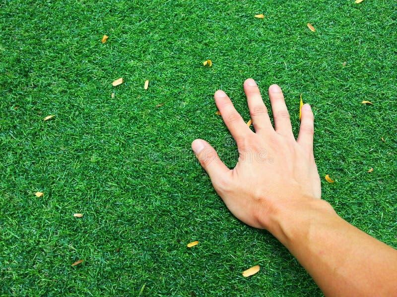 Hand op groen gras stock afbeeldingen