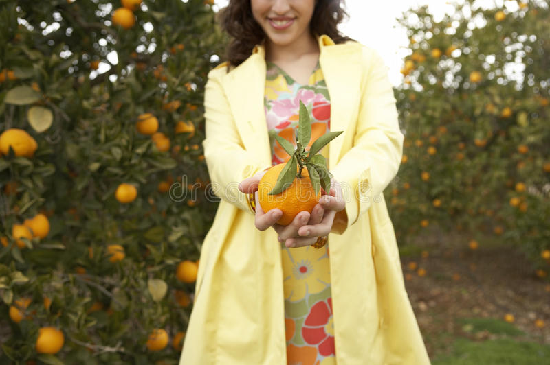 Download Hand with Orange stock photo. Image of bright, female - 24877966