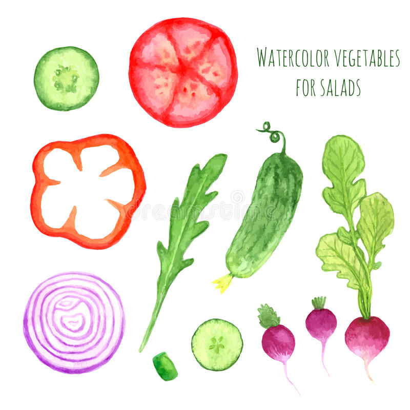 Hand paint watercolor vector vegetables set eat local farm market rustic illustrations with a arugula, onion, pepper, cucumber, to. Mato, radish. Summer royalty free illustration