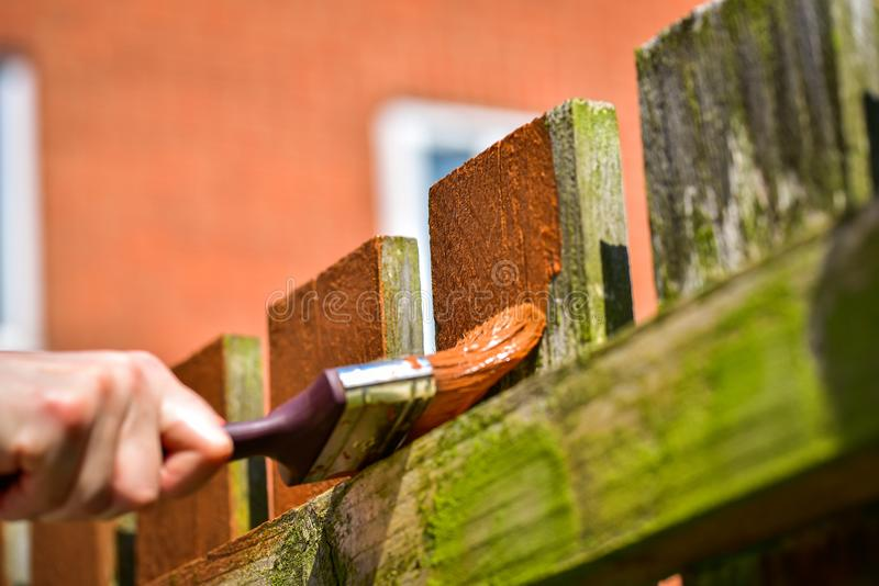 Hand with paintbrush painting wooden fence stock photo
