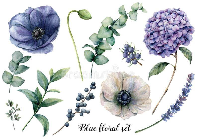 Hand painted blue floral elements. Watercolor botanical illustration with anemone, hydrangea flowers, lavender, juniper vector illustration