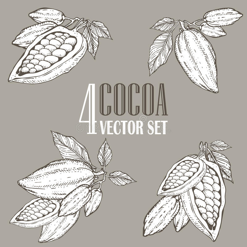 Free Hand Painted Cocoa Botany Illustration Set. Decorative Doodles Of Healthy Nutrient Food. Stock Photos - 67295773