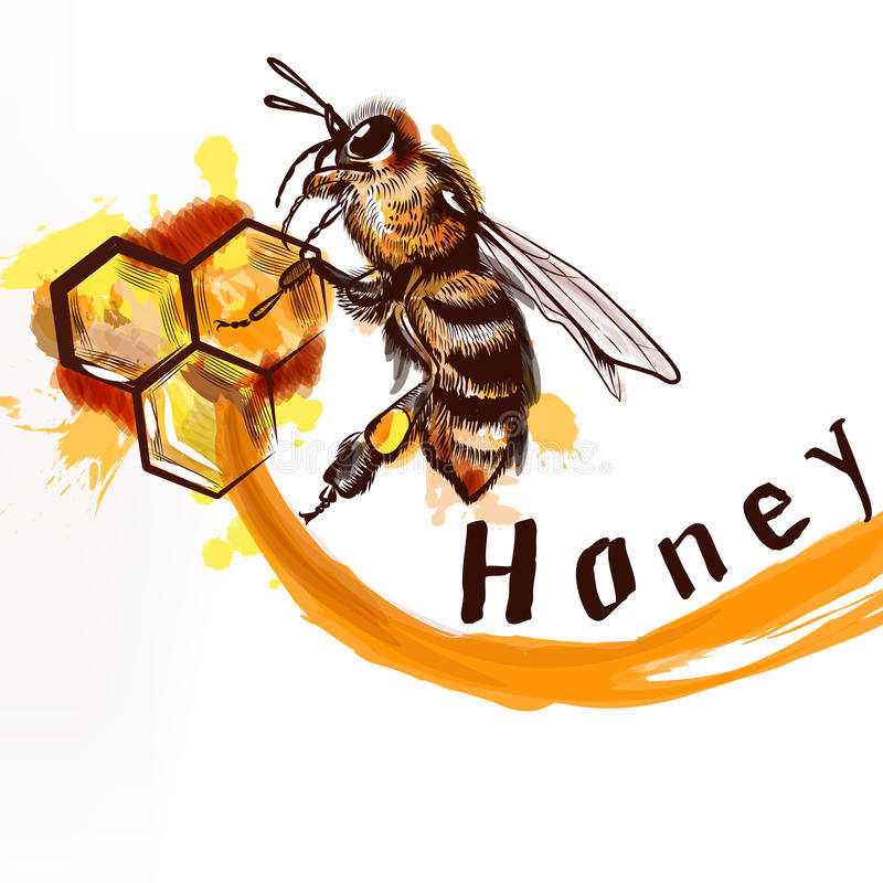 Hand painted detailed bee sitting on a comb fully of honey natur royalty free illustration